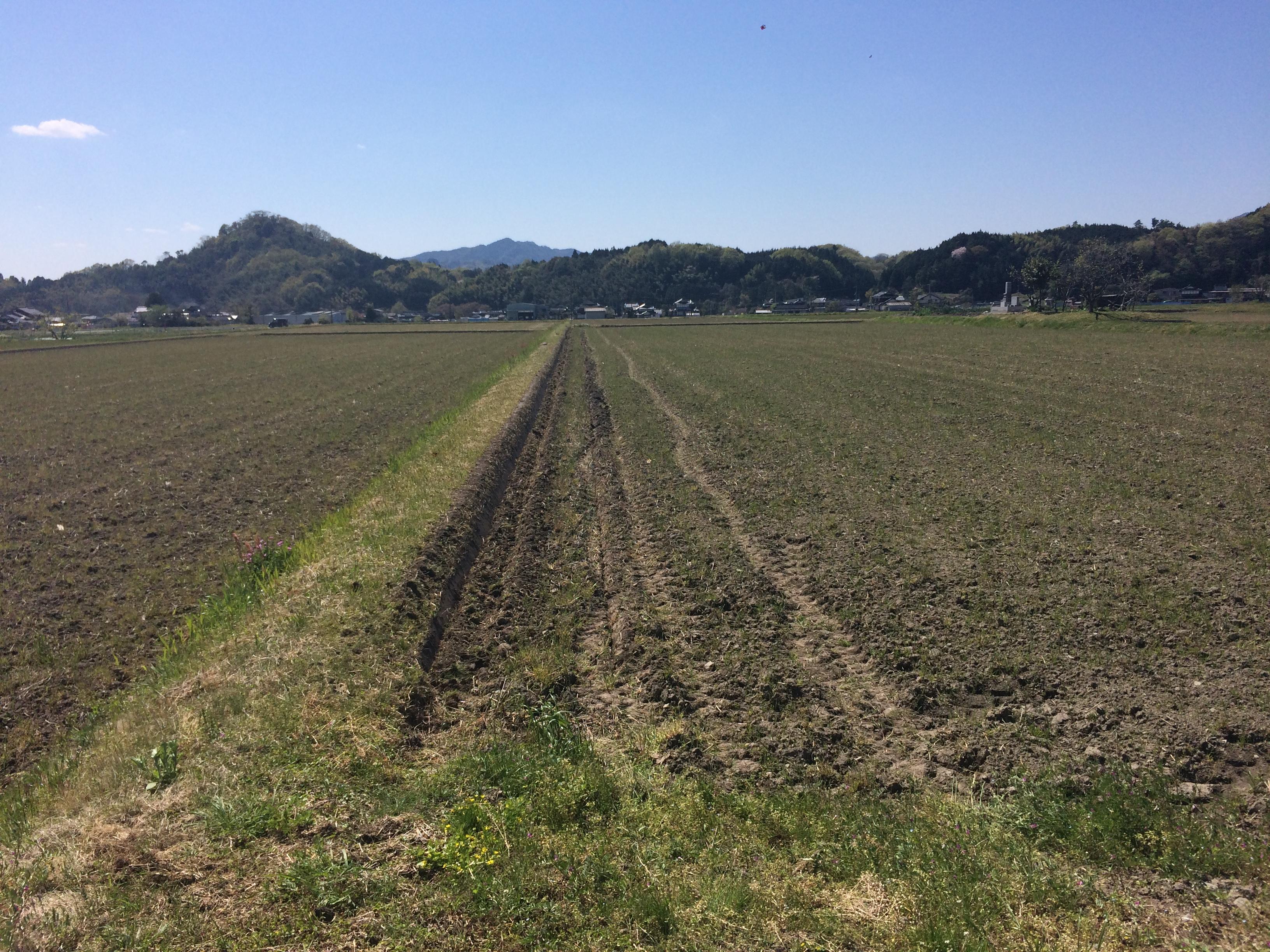 産賀さんの畑